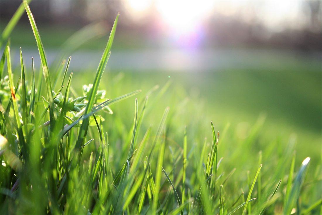 Blog_Smart-Gardening